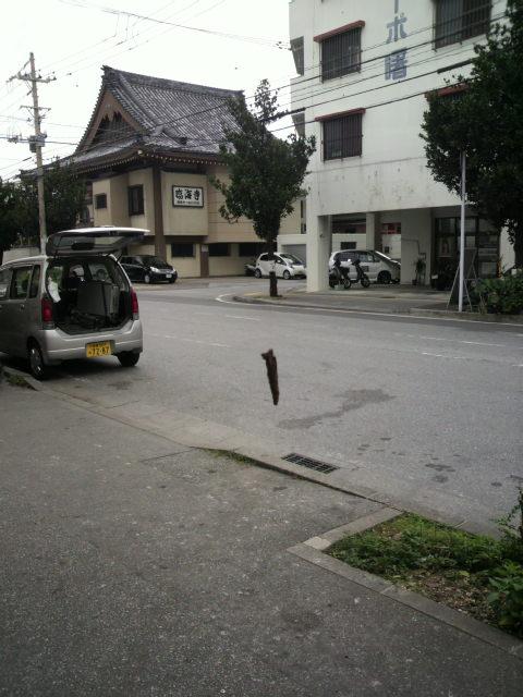 2010121113190001.jpg
